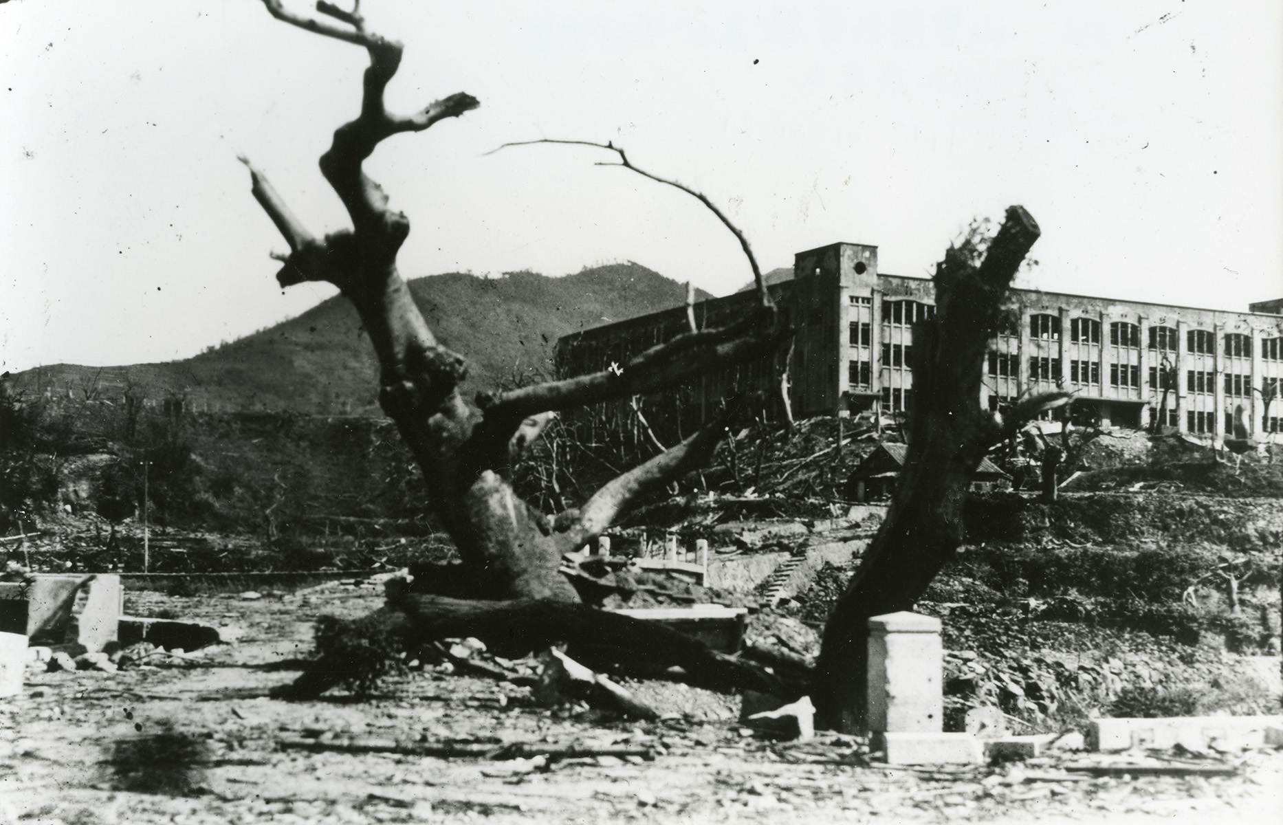 Yamazato National School is seen over the big tree near the Iwaya-bashi Bridge